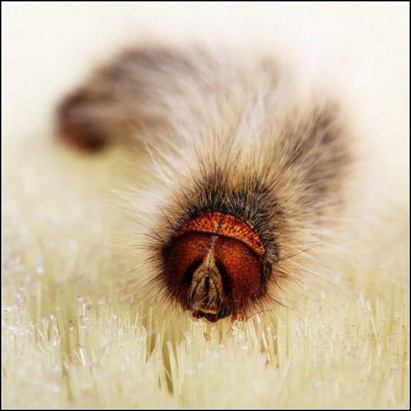 Живые фотографии-натюрморты. Взгляд гусеницы