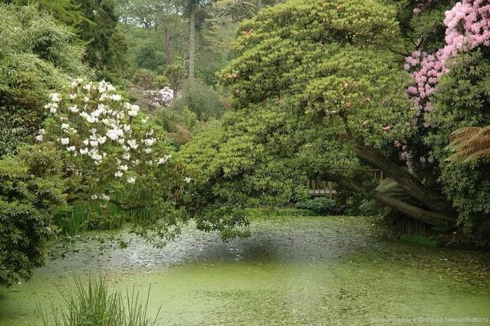 Забытый сад Хелигэн: джунгли