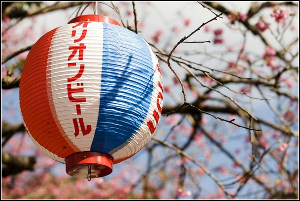 Фестиваль сакуры в цвету: фонарик