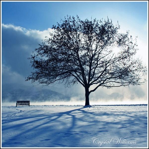 Зима и солнце: великий трофей