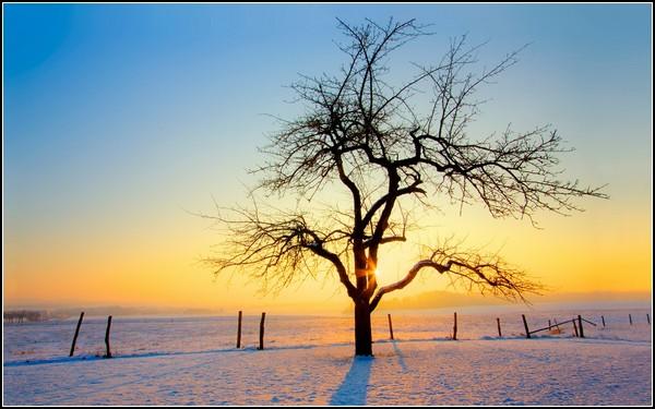 Зима и солнце: новая надежда