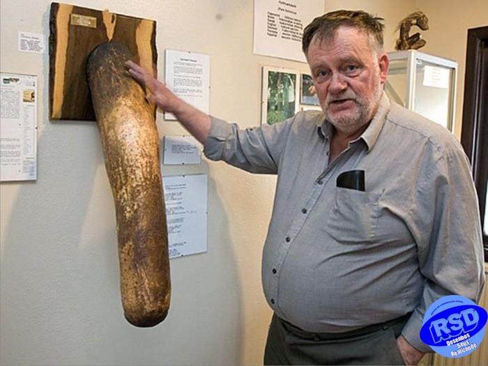 Члены животных, людей, эльфов и троллей. Исландский фаллологический музей