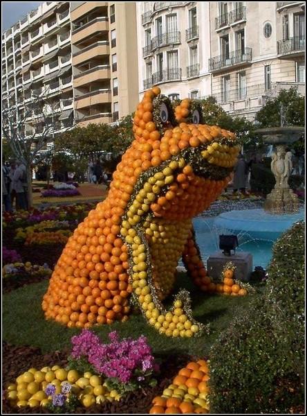 День апельсина: цитрусовый фестиваль в Амстердаме