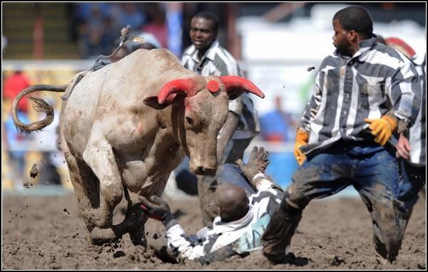 Игра со смертью: быки против людей