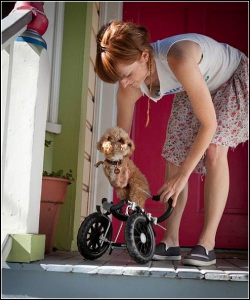Люди и животные на фото. Двуногая собачка-инвалид и ее хозяйка