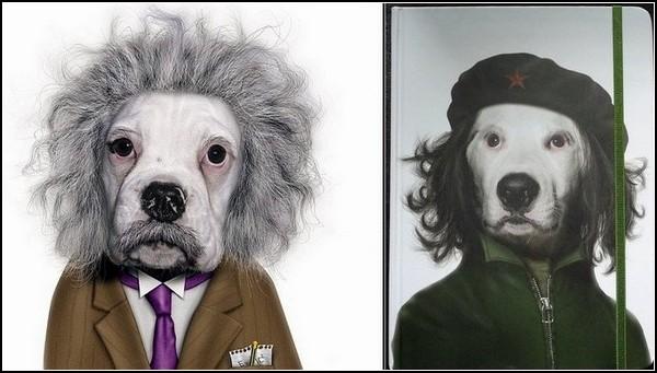 Известные животные. Альберт Эйнштейн и Че Гевара