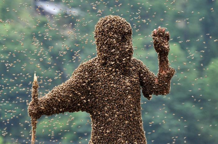 Животные в новостях: китайские пчелы