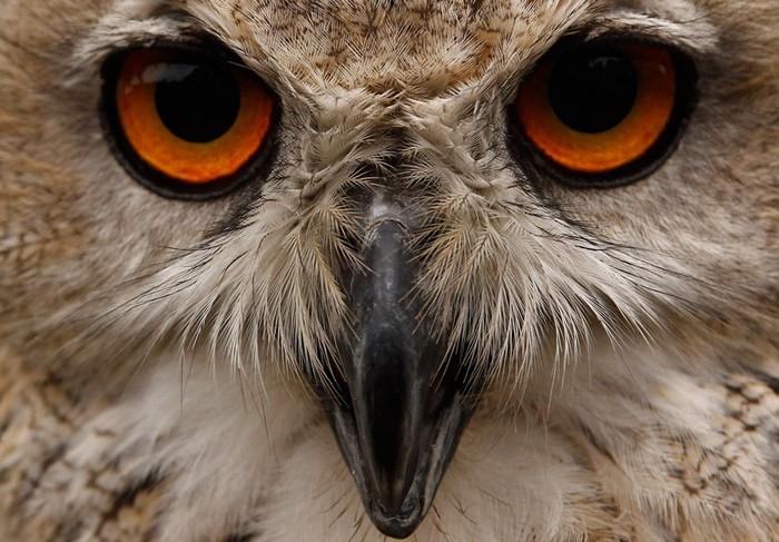 Животные в новостях: питерская сова