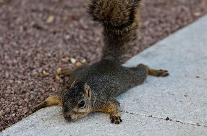 Животные в новостях: хьюстонская белка