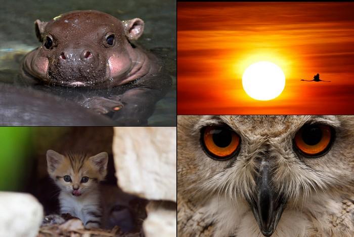 Животные в новостях прошлого лета: обзор