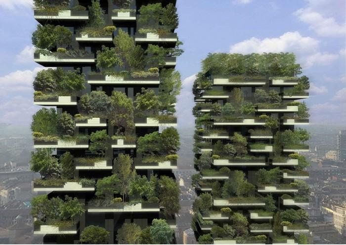 Самый высокий лес в мире: семь верст до небес