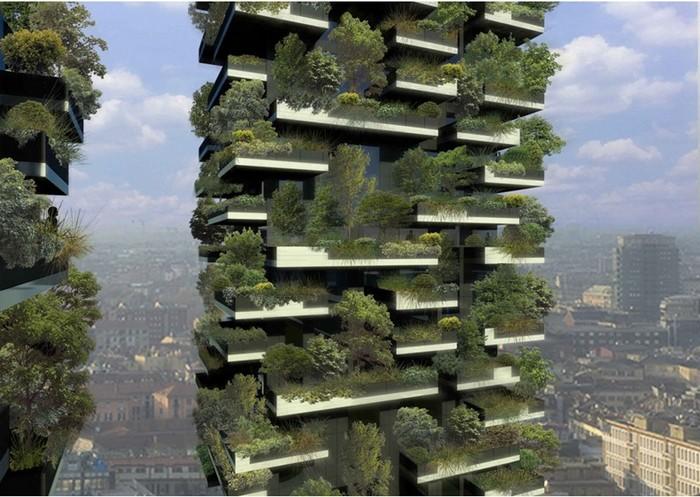 Самый высокий лес в мире: проект