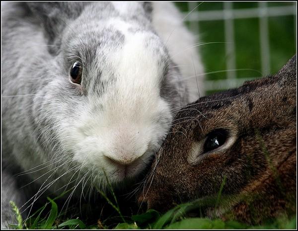 Любовь и кролики: нежная пара