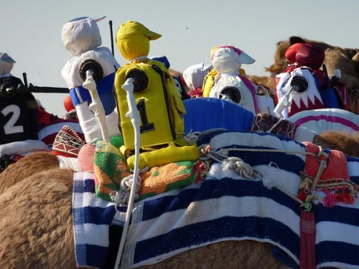 Верблюжьи бега выигрывают роботы-жокеи