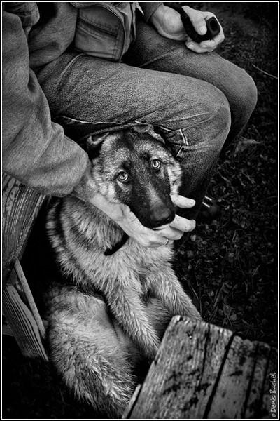 Собачий взгляд на жизнь: черно-белые фото Дениса Бучеля