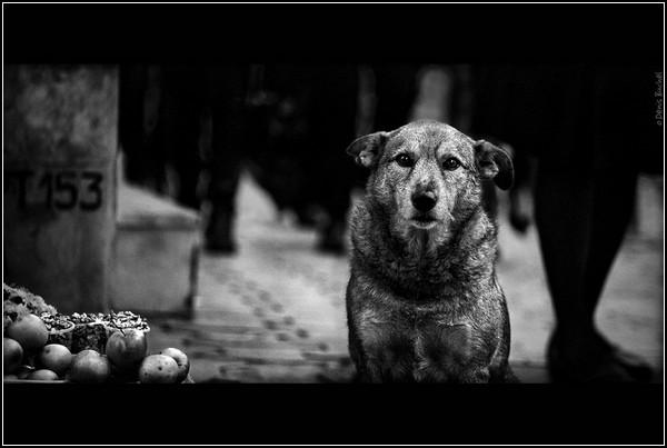 Собачья жизнь. Черно-белые Бимы на фото Дениса Бучеля