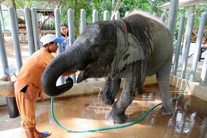 Тайские слоны и их доктора Айболиты