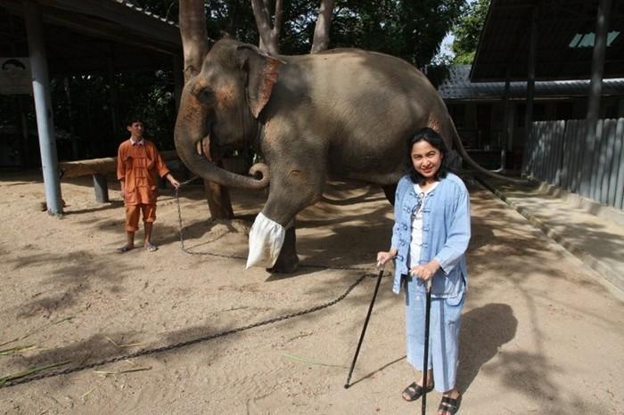 Сораида Салвала - лучший друг тайских слонов