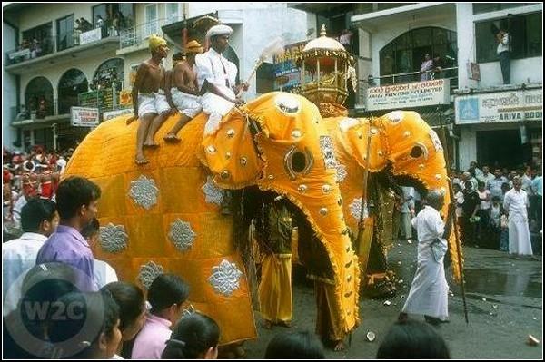 Праздничное шествие за зубом Будды на Шри-Ланке