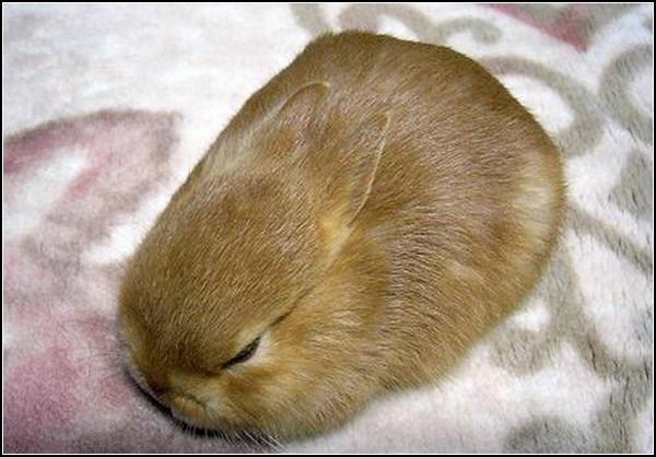 Любовь и кролики: Просто Кролик