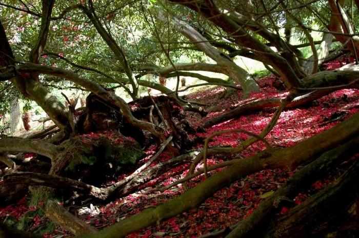 Забытый сад хелигэн чудом обретенная