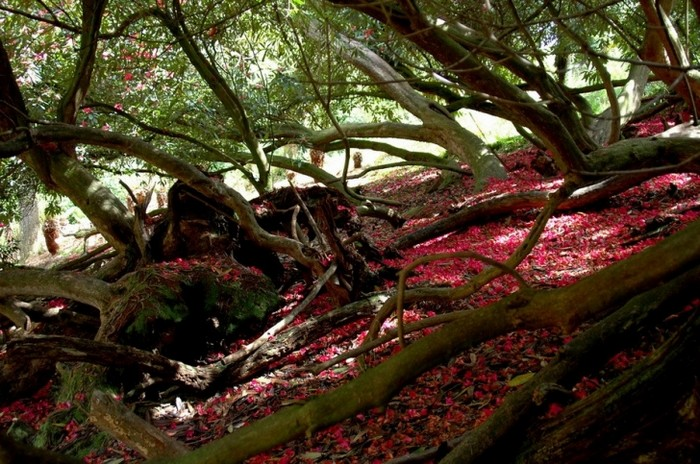 Забытый сад Хелигэн