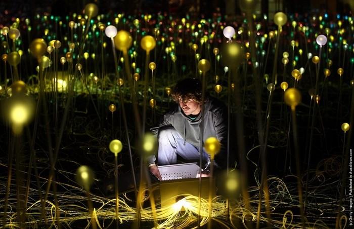 Светлое поле: инсталляция Брюса Мунро