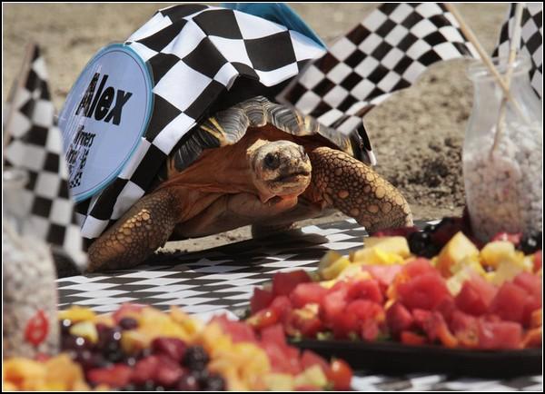 Быстрые черепахи: необычная гонка в Индианаполисе