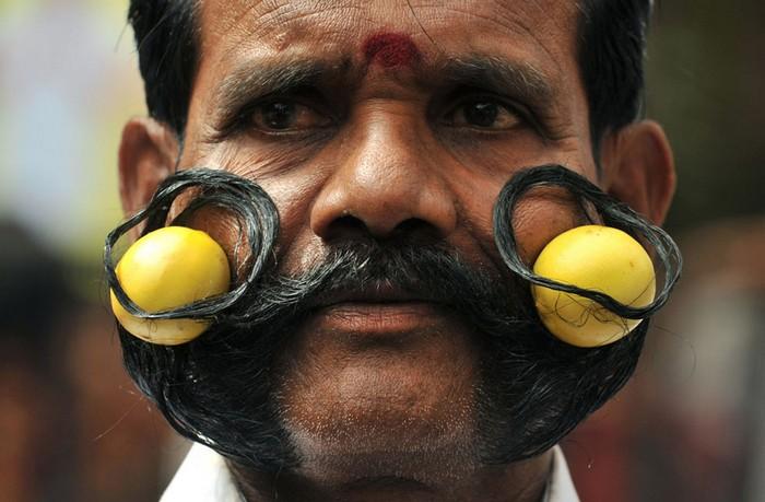 Индийские фестивали: длиннейшие усы с лаймами. Фото Ноа Зилама