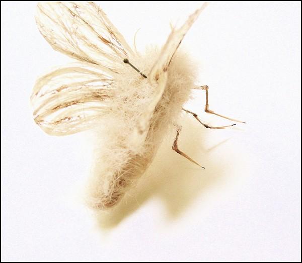 Необычные насекомые из волос: мотылек