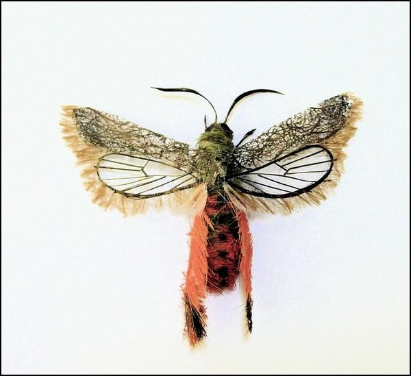 Необычные насекомые adrienne antonson