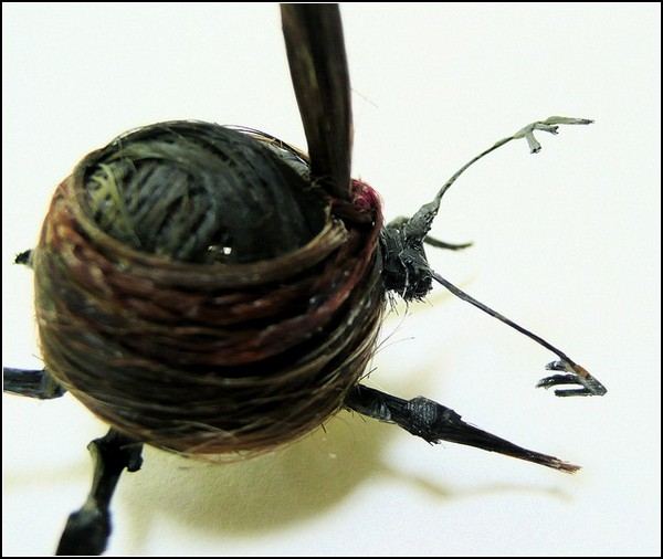Необычные насекомые из волос: жук