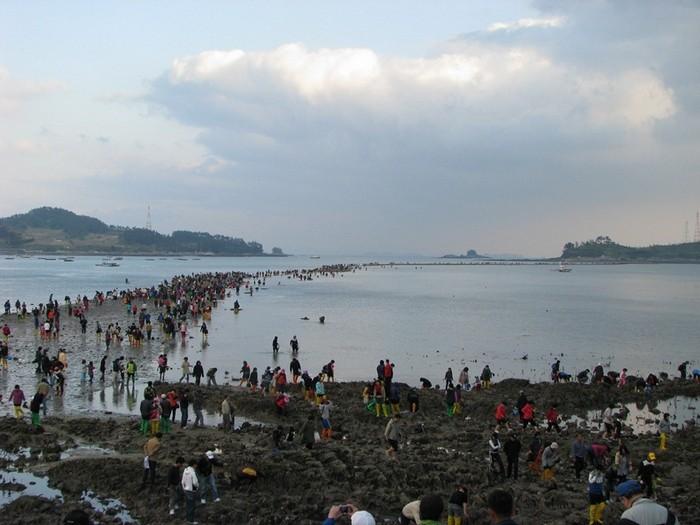 Ходить по воде - это по-корейски: чудо острова Чиньдо