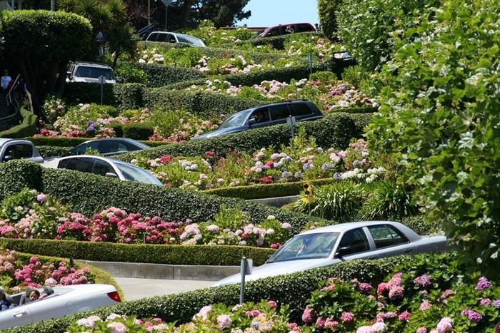 Самая кривая улица в мире находится в Сан-Франциско