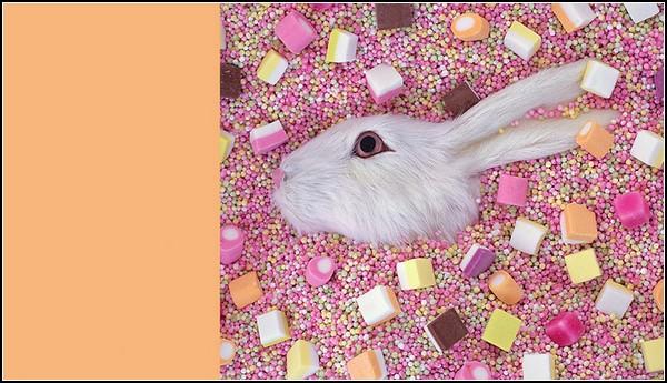 Разоблачение жизнерадостности: кроличья голова в конфетках