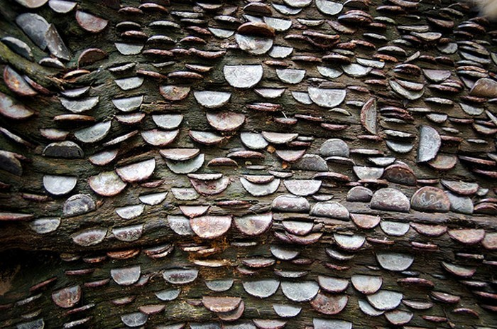 Чисто английское растение: денежное дерево