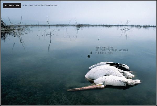 Зеленая реклама. Пеликан, умерший естественной смертью