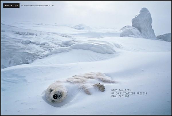 Зеленая реклама. Белый медведь, умерший естественной смертью