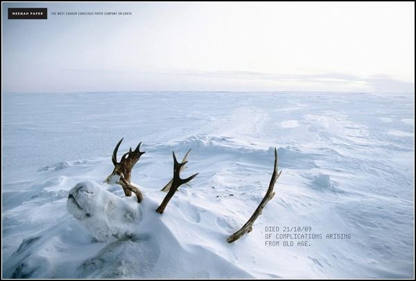 Зеленая реклама. Северный олень, умерший естественной смертью