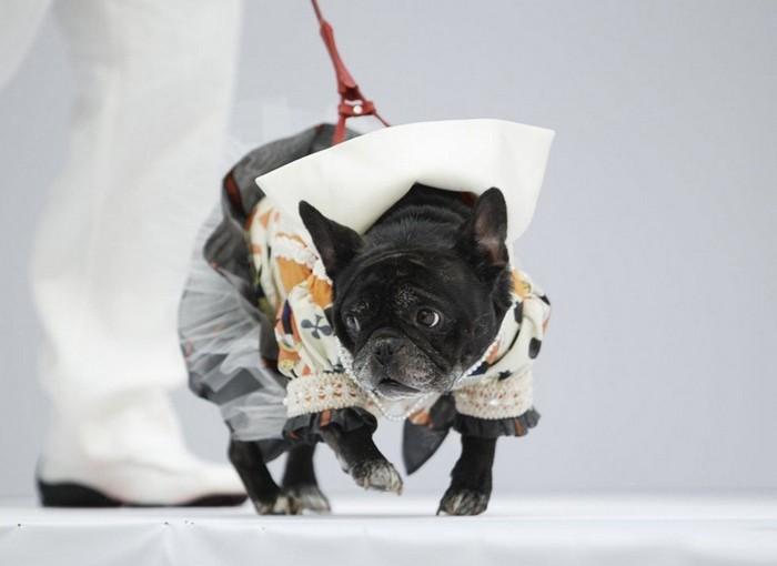 Модные собаки на шоу в Форт-Лодердейл