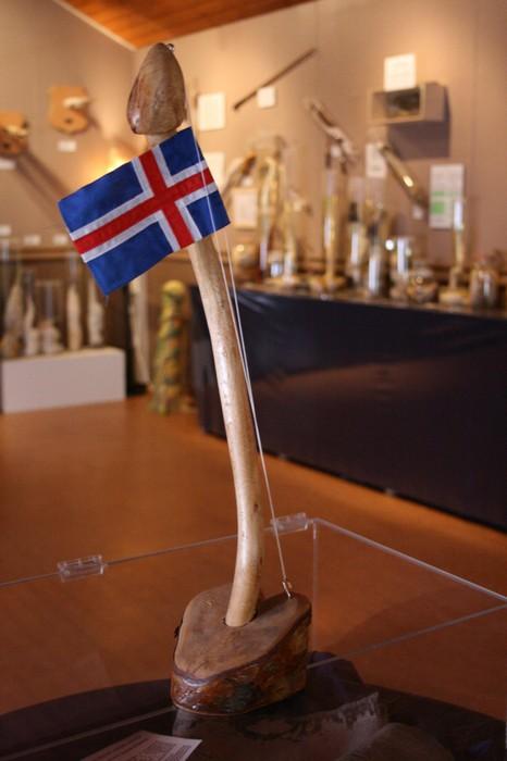 Исландский фаллологический музей: грандиозное собрание членов