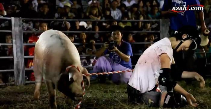 Свинство по-японски: родео на Пятачках