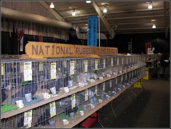 Выставка голубей-2011 в США: наши люди