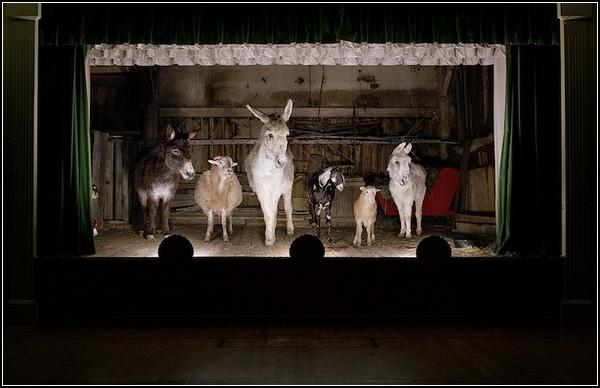 Животные под светом софитов