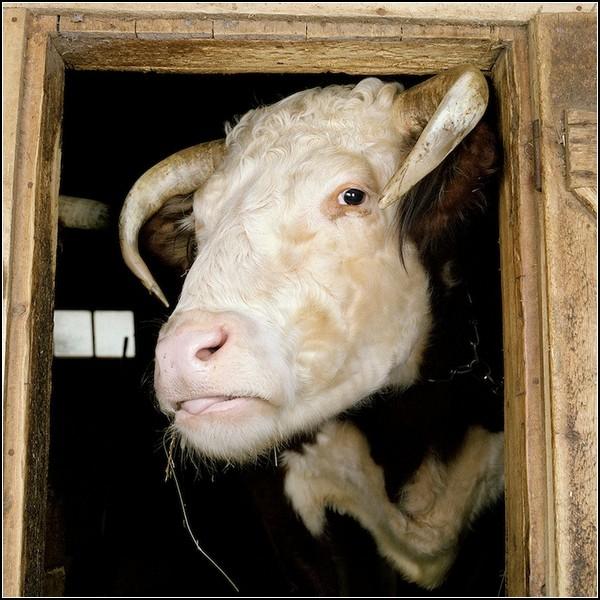 Модная животная ферма в фотопроекте Роба Макинниса