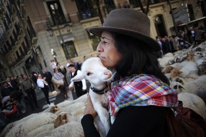 НЕ покорное стадо овец оккупирует Мадрид