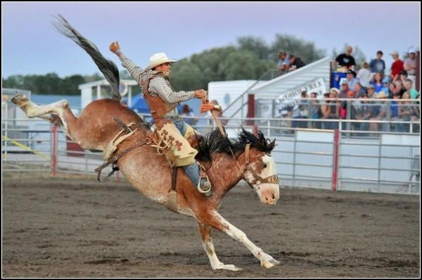 Летние фестивали-2011: кони в Монтане