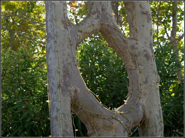 natural art: living wooden sculptures.