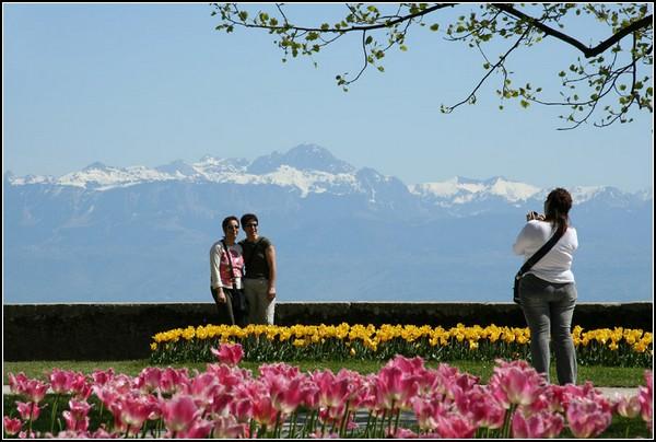 Праздник тюльпанов в Морже: горы, озеро и цветы