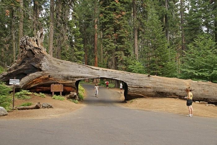 Дупло в дереве может быть туннелем